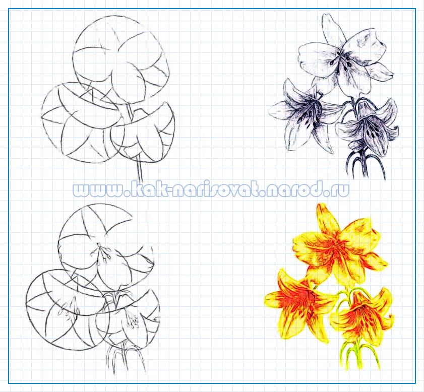 комнатный цветок цветущий белыми колокольчиками фото