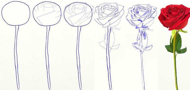 Простая техника рисунка розы